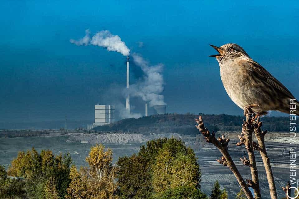 Warum Greenwashing ins Abseits führt
